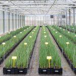 Plantenpaspoort